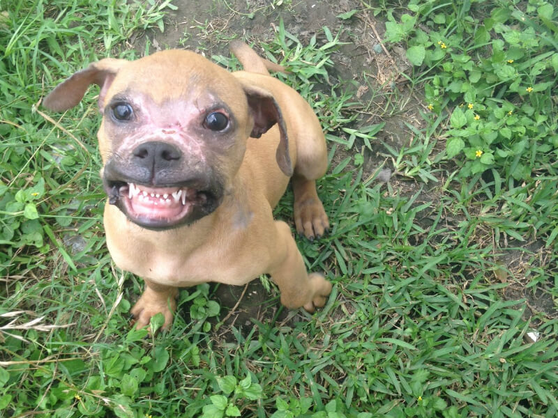 conor the burned puppy