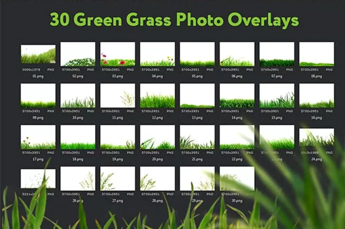 30 Green Grass PNG Photo Overlays