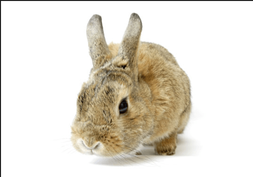 go cruelty-free with your makeup
