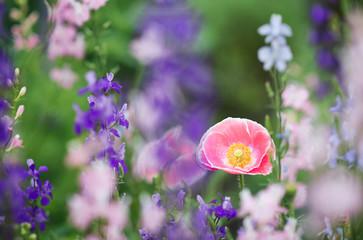 pink planting
