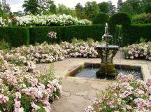 Victorian Garden Design - Ludwigs RosesLudwigs Roses