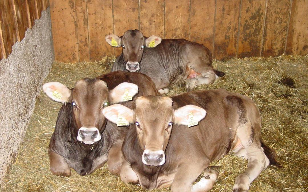 Geruchsbewertung Tierhaltung