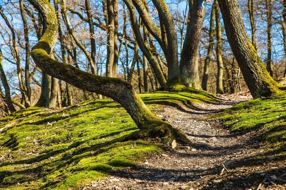 ruta de senderismo por el bosque