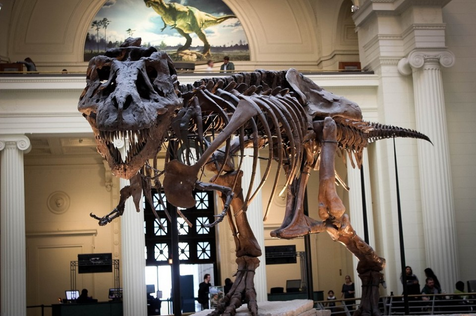 El T-Rex de The Field Museum