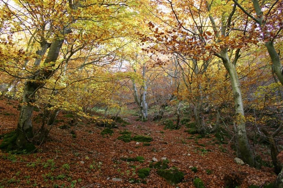 Mejores caminatas en otoño en España