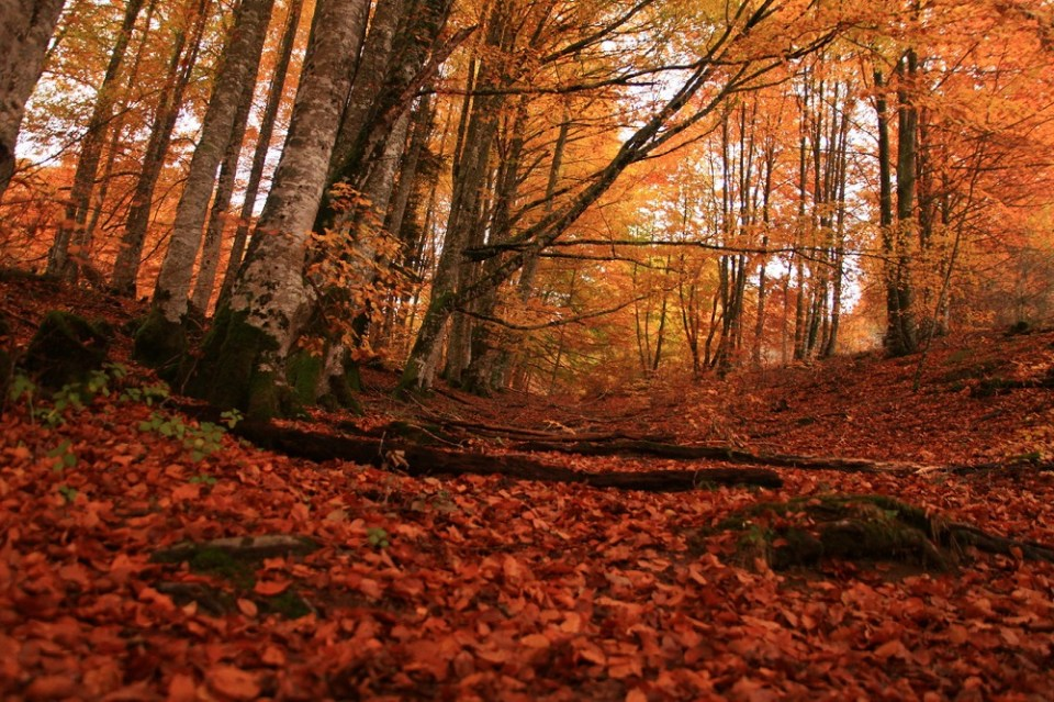 Selva de Irati, España