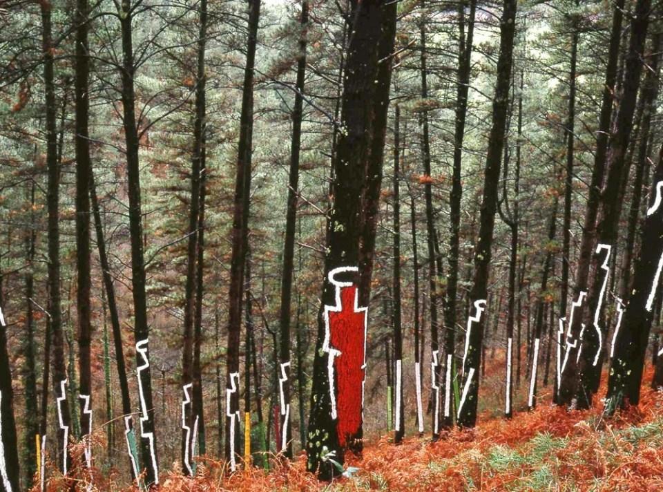 perspectiva en bosque pintado de Oma