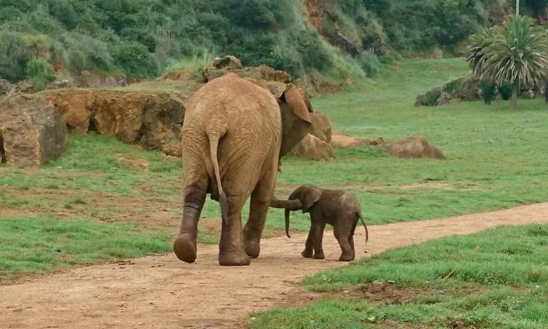 parque natural Cabárceno animales