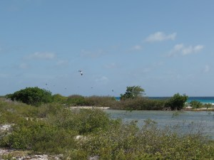 Windsurfers in Bonaire