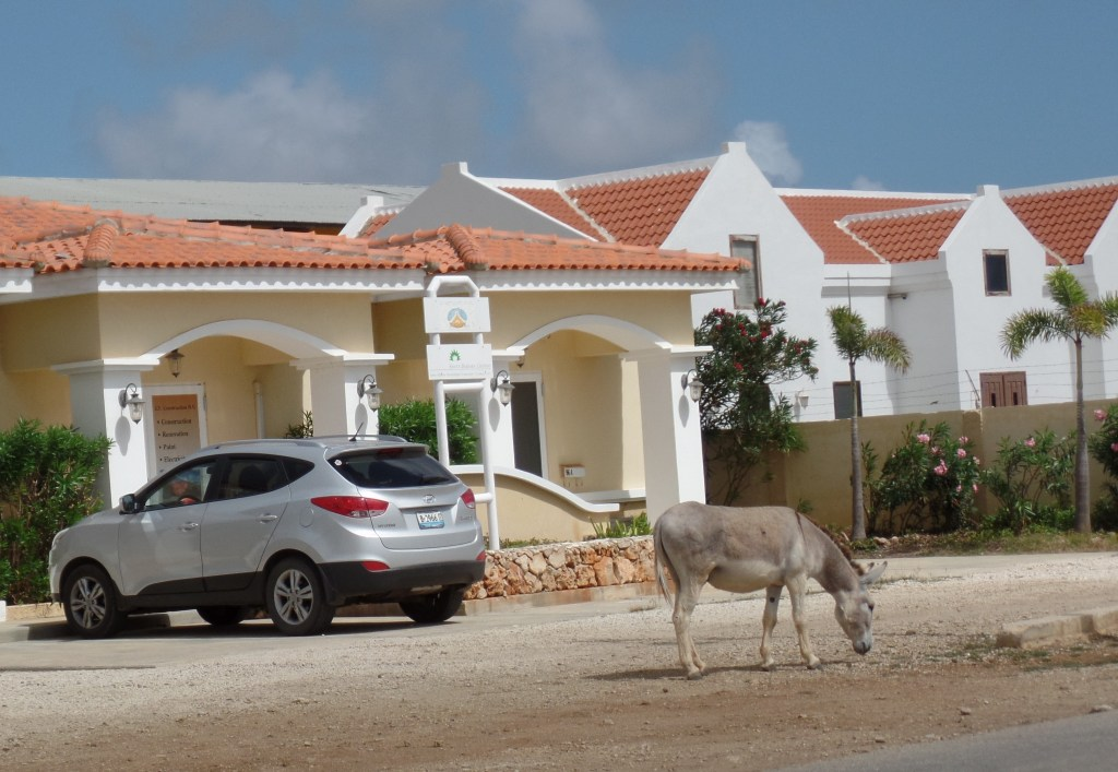 Donkey on Bonaire