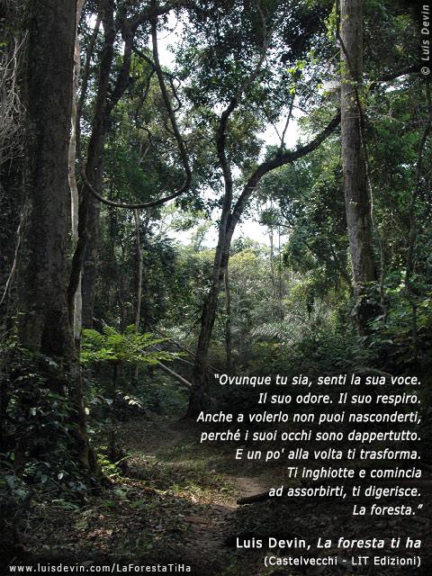 Gabon  Fotogallery del romanzo La foresta ti ha con