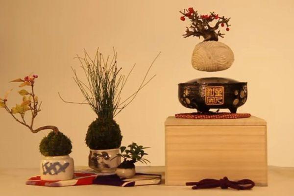 Air Bonsai, tu propia planta flotante