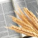 O Pão e a Palavra: as bases da liturgia cristã