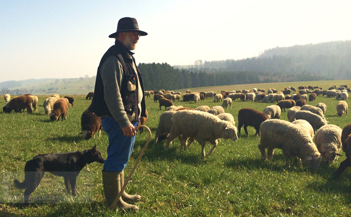 A Shepherd With His Flock Of Sheep In Gossliwil Switzerland 9 March 2014