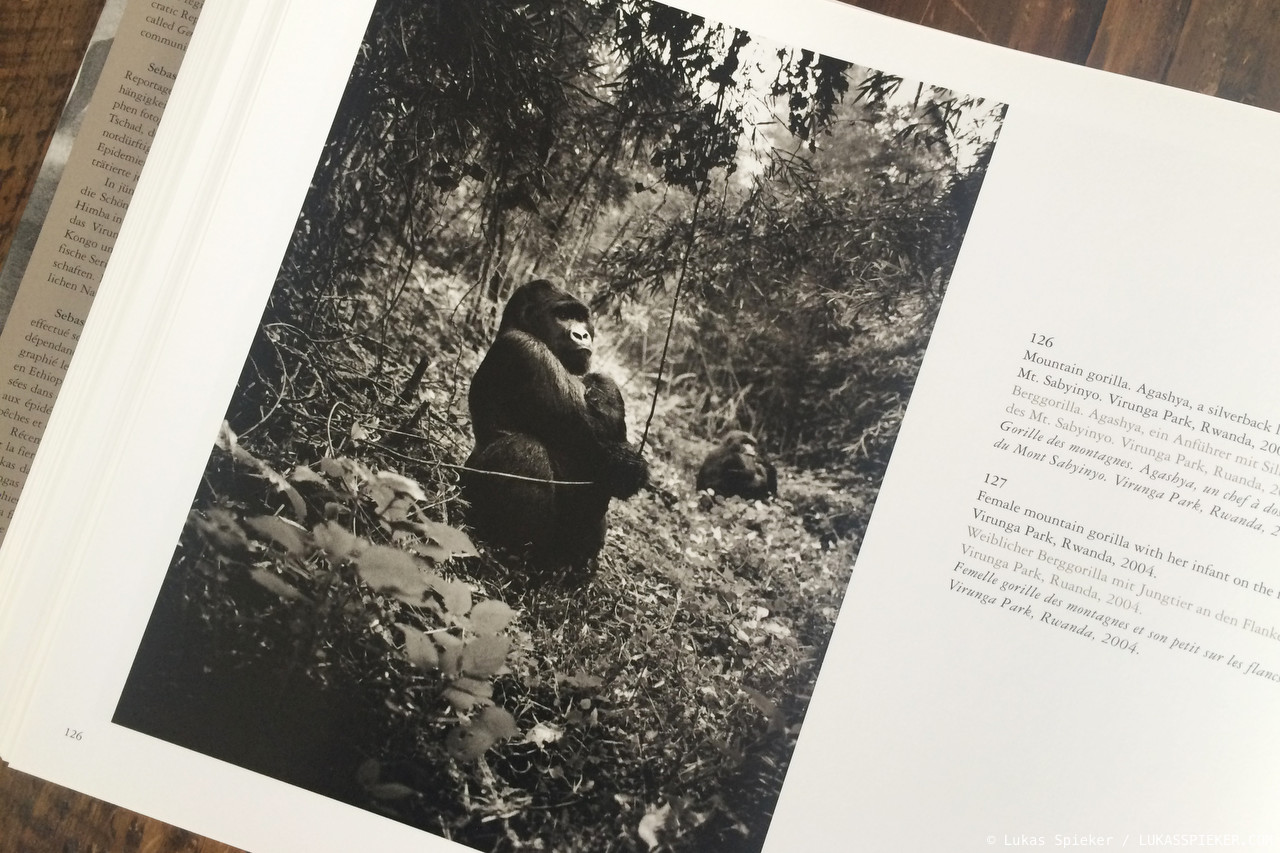 A photo of mountain gorilla Agashya appears in the book 'Africa' by Sebastiao Salgado. The photo was taken in 2004.