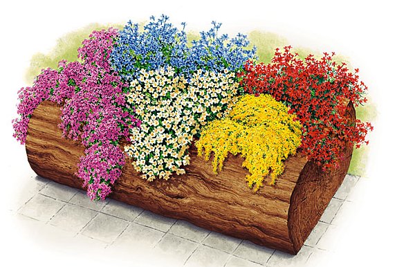 Plantarea florilor de balcon – Start la ghivece si jardiniere