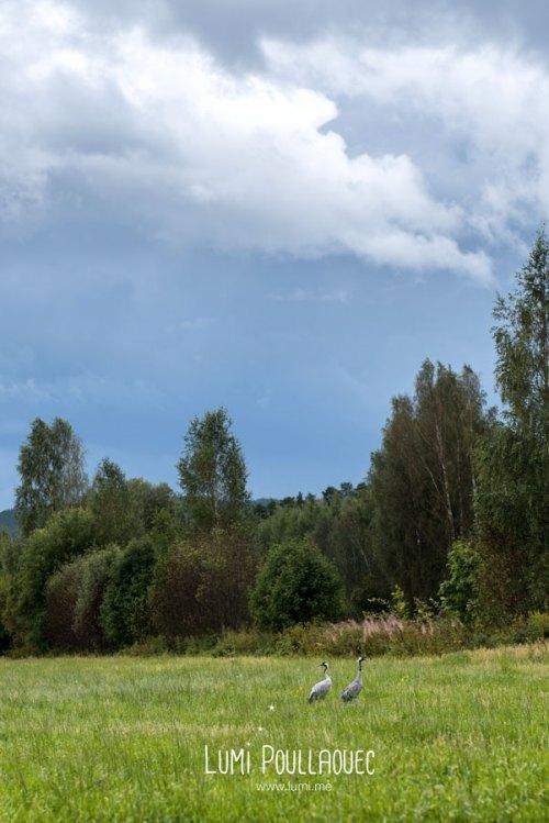 finlande-lumi-poullaouec-photographies-27