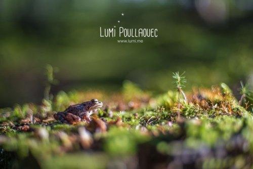finlande-lumi-poullaouec-photographies-9