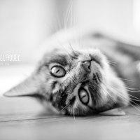 Photographies d'un chat tout mignon !