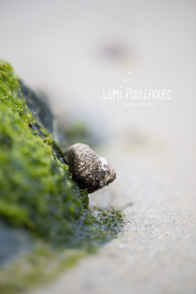 macro-Lumi-Poullaouec-11