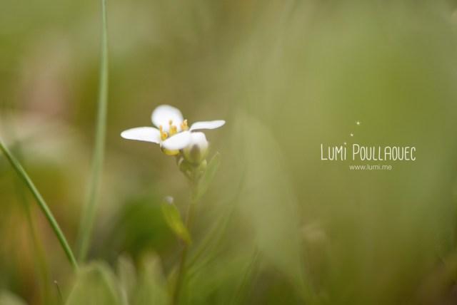 macro-Lumi-Poullaouec-7