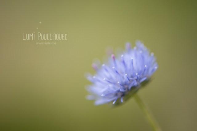 macro-Lumi-Poullaouec-8