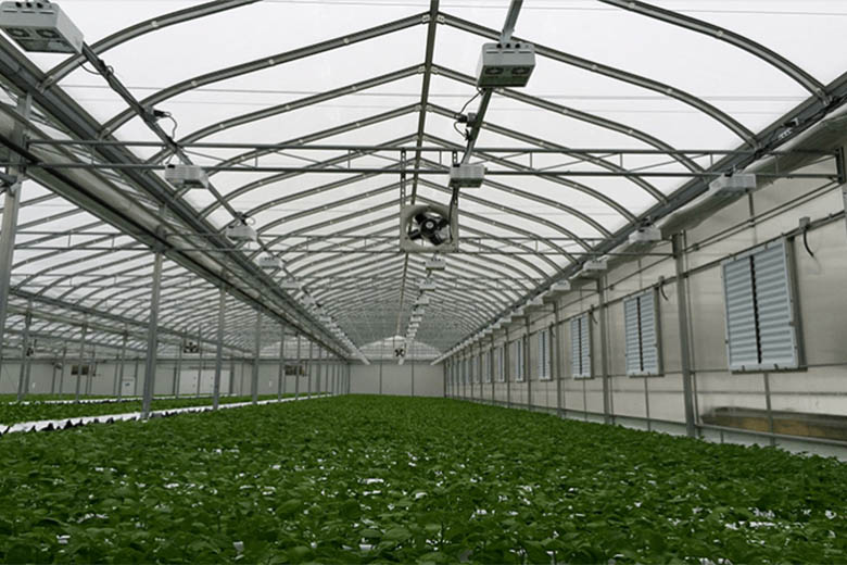 Sklarczyk Seed Farms Inside Greenhouse