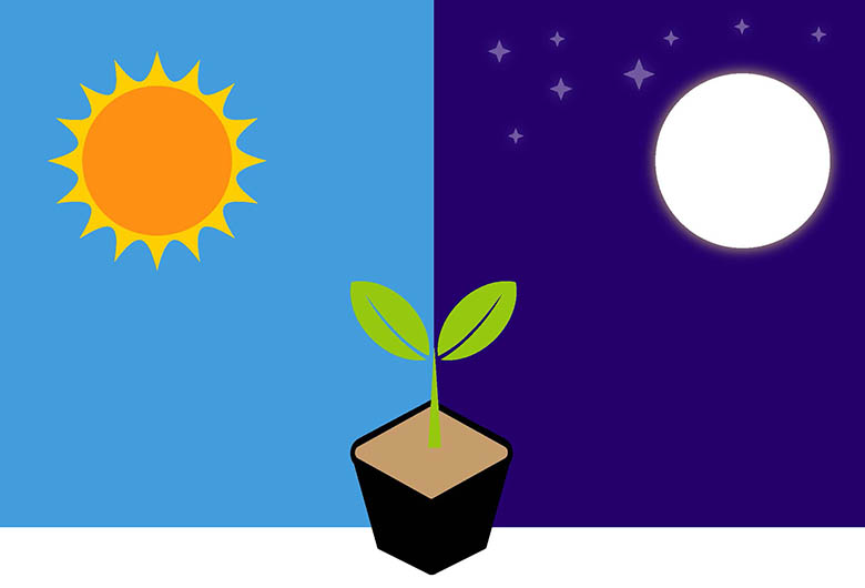 Photoperiod is the amount of time a plant receives light.
