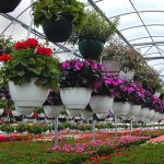 Floriculture production greenhouse