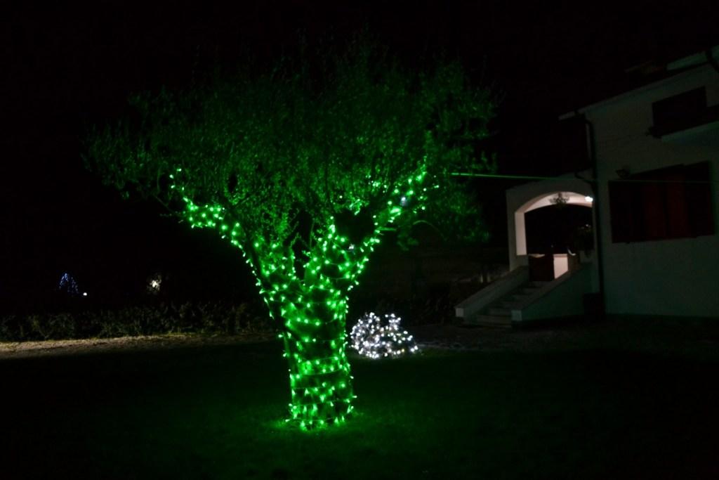 (Foto 15- 53) Ulivo verde 5m