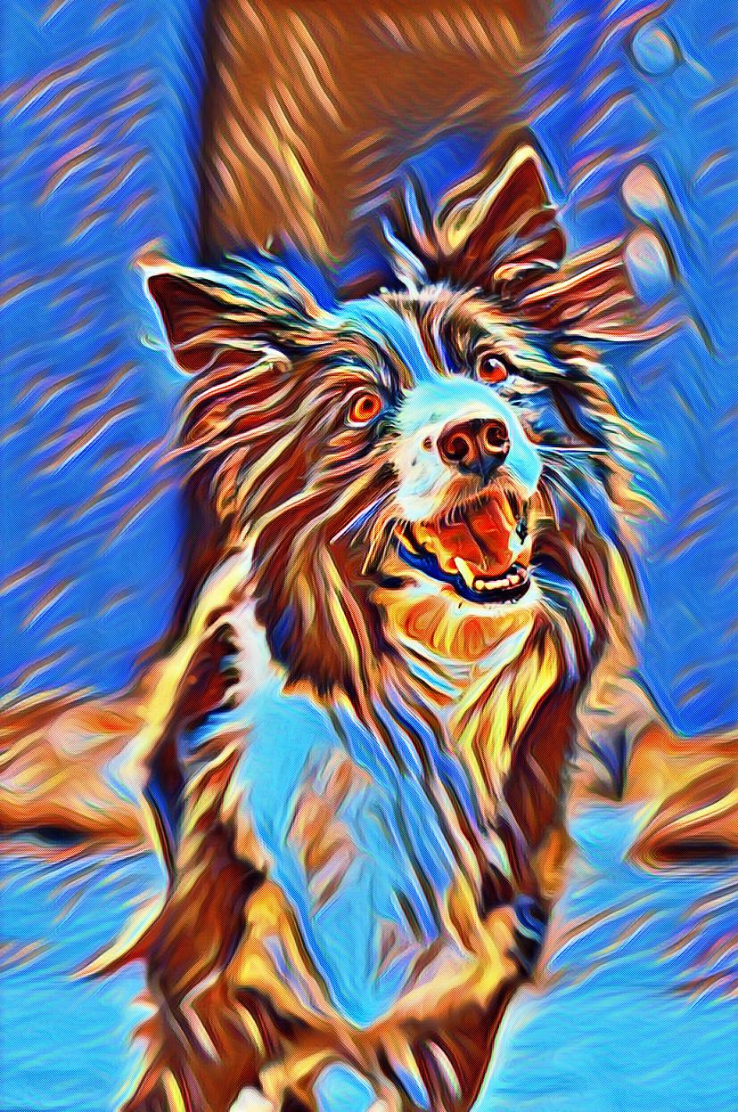 splash dog art