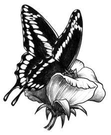 La farfalla - Canzoni er finestra ...