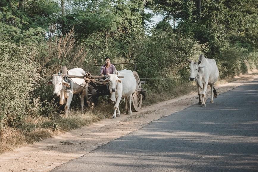 Myanmar-2137
