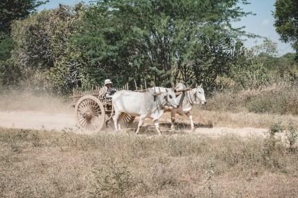 Myanmar-2422