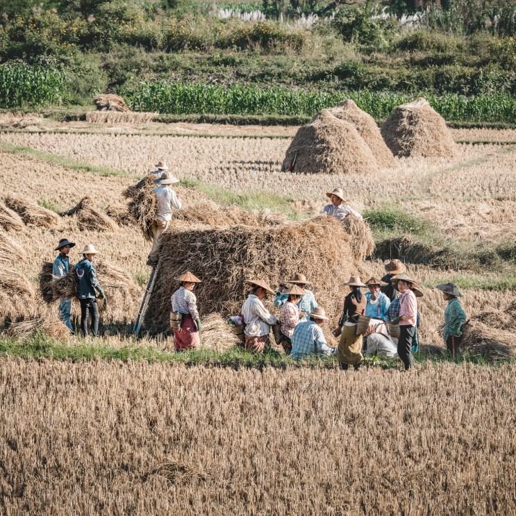 Myanmar-3624-2