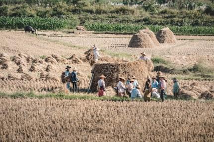Myanmar-3624