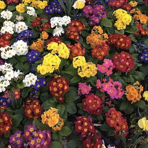 Présentation fleurs pour les stages alternatifs de yoga du mois de mai