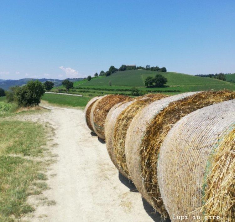 Sentieri a Quattro Castella: tra le colline di Puianello