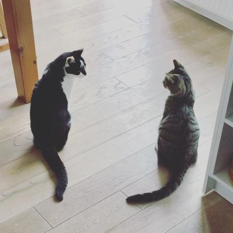 Bibi und Toby