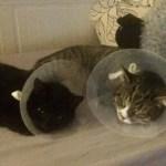 kastrierte Katzen