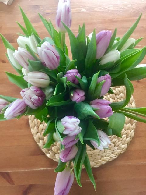 Tulpen - Alltagstrott