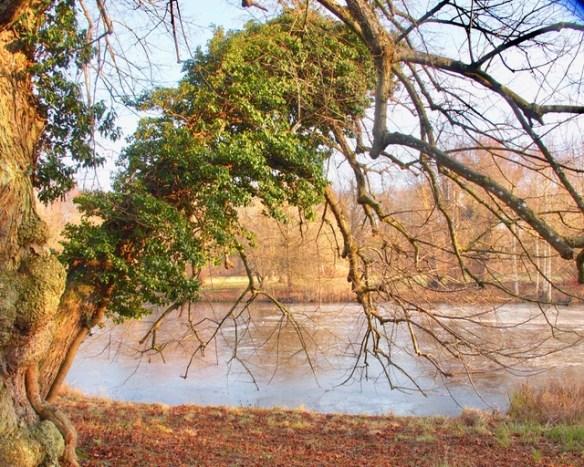 Baum hinter Schloss Salzau