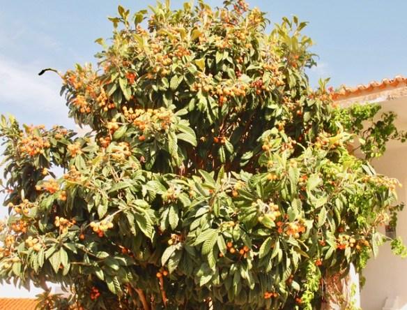 Orangenbaum - Montagszeuch