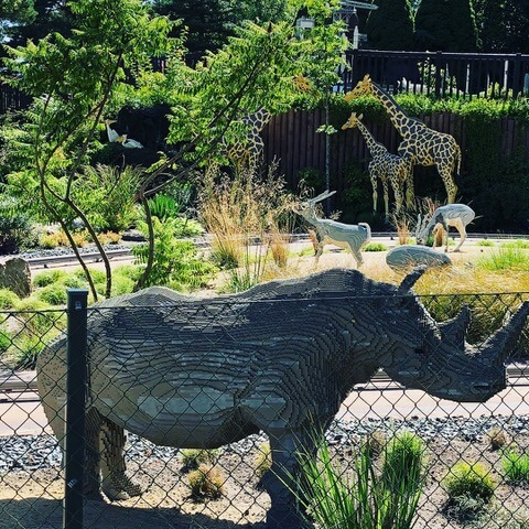 Nasi, das Nashorn