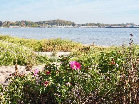 Herbststrand in Eckernförde - Herbstferien Woche 3 - Freitagszeuch