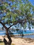 Urlaub auf Mallorca - Freitagszeuch