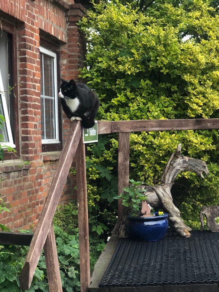 Katze an Reiterhof
