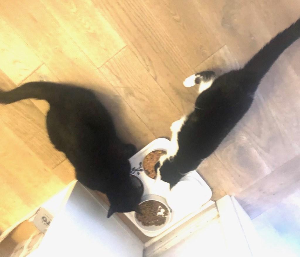 Katzenhunger - #12 von 12 im Juli 2020