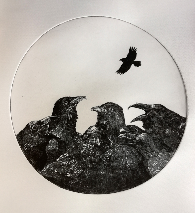 Ocells Nómades