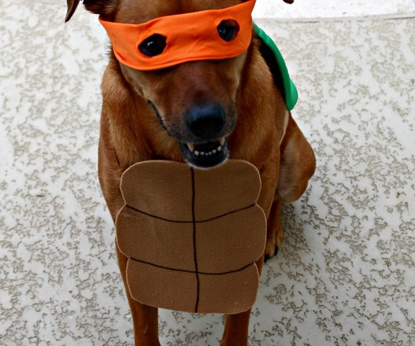 DIY Dog Halloween Costumes 2016